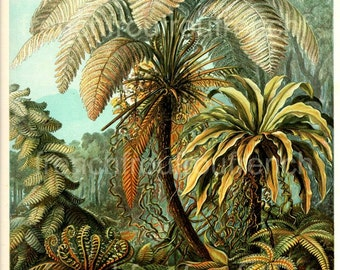 antique palm trees felicinae ferns illustration ernst haeckel digital download