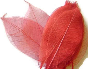 One Dozen Natural Dark Peach Skeleton Leaves Great for Corsages, Hair Clips, Paper Crafts