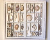 seashell art composition, wall art, in a repurposed and altered printers type box and framed.