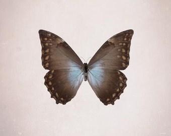 Butterfly Print, Blue Morpho, Specimen, Baby Girl Nursery Decor, Neutral, Shabby Chic, Nature Photography, Large Wall Art