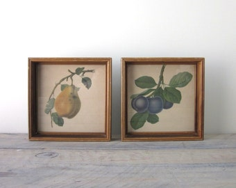 Vintage Framed Fruit Pictures