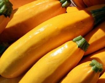 Squash, Golden Straightneck Summer Squash Seeds - Perfect for All Summer Harvests