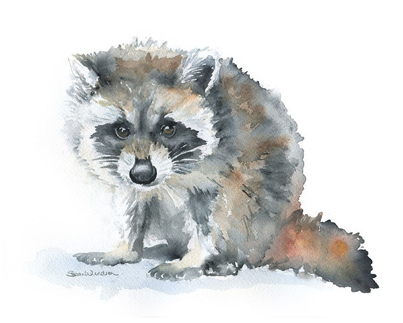 Raccoon Watercolor Painting Giclee Print 10 x 8 Nursery Art Raccoon Painting