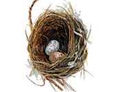 Woodland Nest with two eggs - Archival quality print based on the Original Watercolor