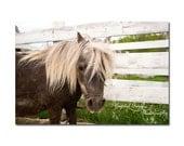Horse Photography Farmyard Animals Farm Home Decor Print Pony Nursery Art Miniature