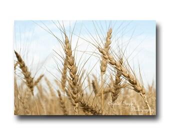 Wheat Field Photography, Fine Art Nature Picture, Rustic Man Cave Decor, Farmer Birthday Present, Farmhouse Accent, Office Wall Decoration