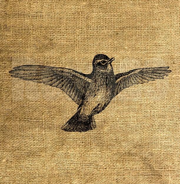 description aerial flying birds - photo #48