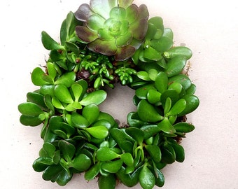 Gift of Spring . . . Jade Succulent Wreath . . . this is ready to ship . . .