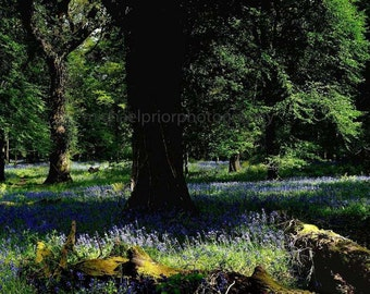 fairytale killarney national park in kerry