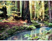 Fine Art Photography Print - Deep in the Redwoods (Custom sizes available 8x10 8x12)