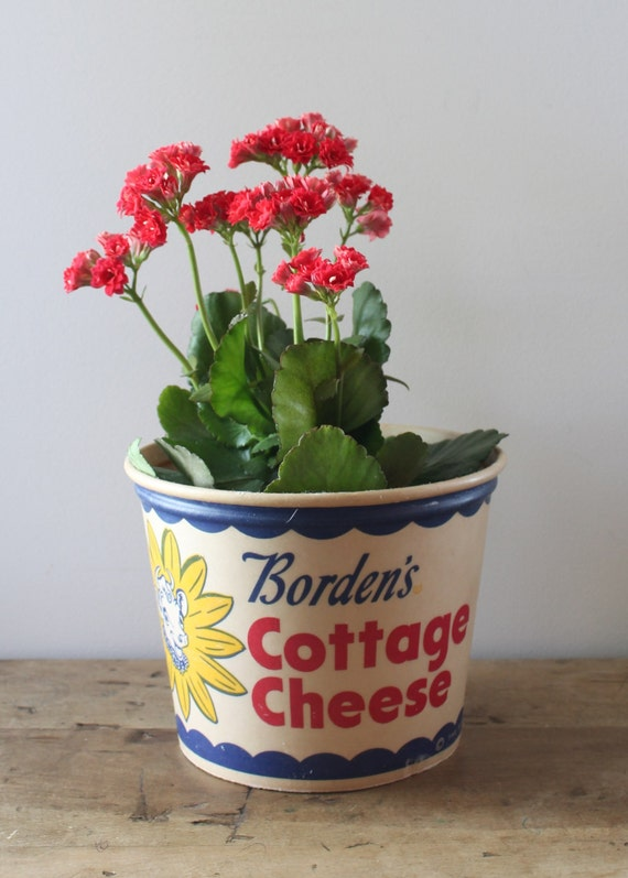 Vintage Borden's Cottage Cheese Tub from 1950's