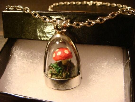 how to build a mushroom terrarium