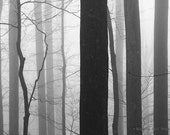 black and white photography, landscape photography, tree photography, nature, forest photography, woodland, fog, trees