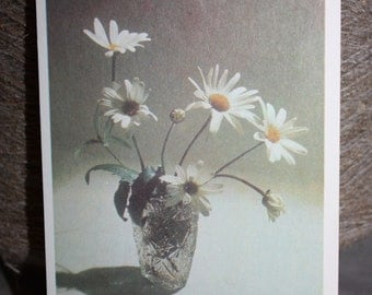 Greeting Card with Daisies  - Gorgeous Postcard