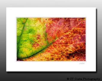Autumn Leaf Abstract Print that is Matted and Ready for Framing, vibrant fall colors, fits 5x7 inch frame