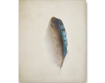 Feather photo, blue jay feather print, nature photo, nature print, feather photography, feather print, feather art print, grey, gray, rustic