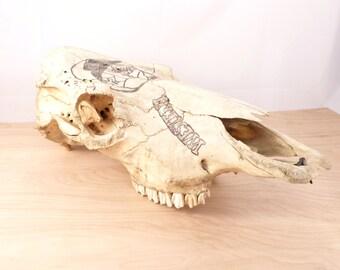 Cow Skull Wall Hanging - Western Art - Taxidermy