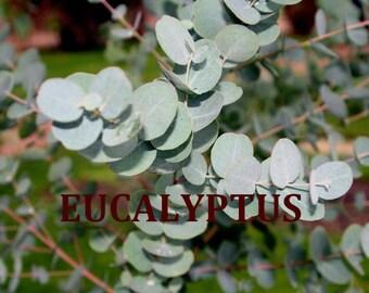 Organic EUCALYPTUS Essential Oil 1/2 OR 1 oz size (Pure, Uncut)