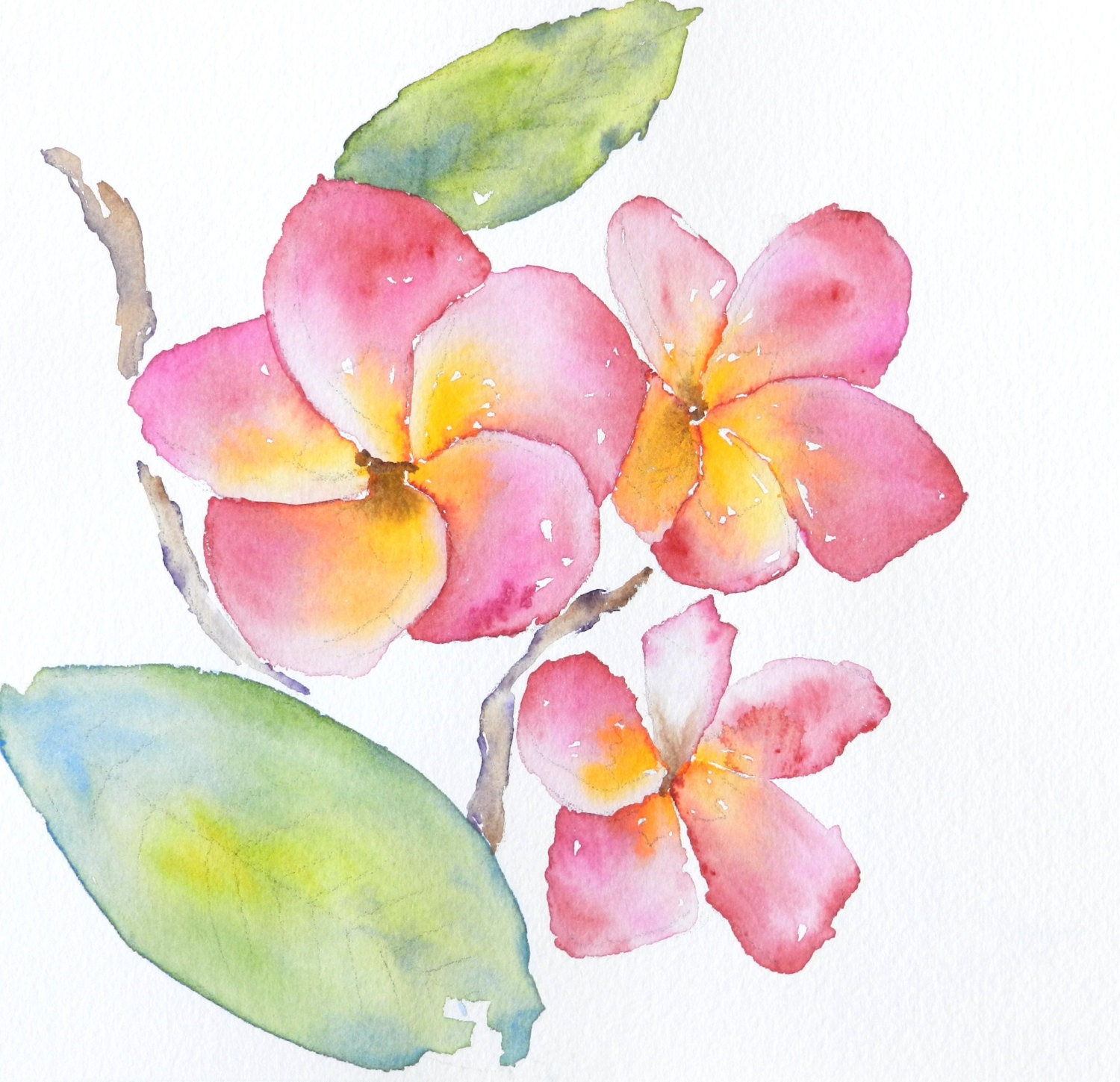 Pink Plumeria Flower Clip Art Original watercolor plumeria