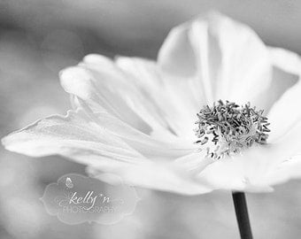 Black and White Photography- Flower Photography, Soft Grey Wall Art, White Poppy Print, Black and White Flower Photo, Poppy Flower Art Print