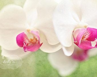Orchid Photography- White Orchids- Pink Green White- Moth Orchids Photo- Floral Wall Art- Flower Photography- White Orchid Print