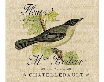Vintage warbler bird French ephemera Digital download image for iron on fabric transfer burlap decoupage pillows cards spring decor No. 1825