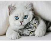 4 Kitten Cat Cats Kittens Greeting Notecards/ Envelopes Set