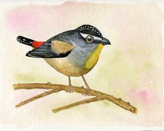 Bird art Original watercolor painting Hand painted art card Summer decor
