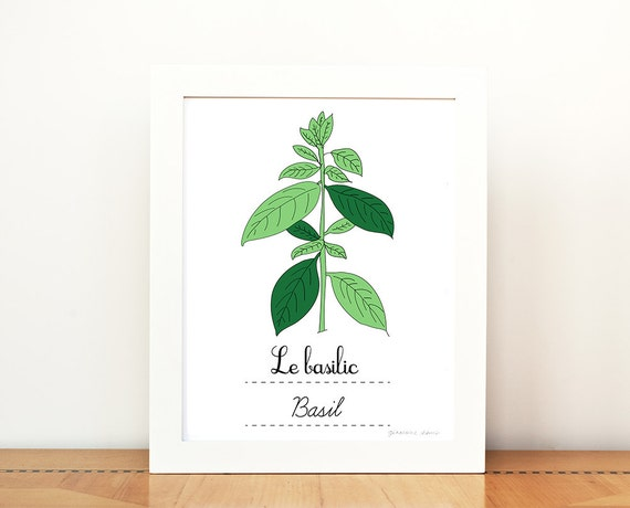 Kitchen art basil french herbs print 8x10 art print green for French kitchen artwork
