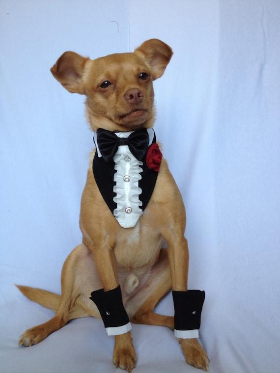 Pet Wedding Ruffled Tuxedo Bandanna and Rhinestone Shirt Cuff Set for a Cat or a Dog