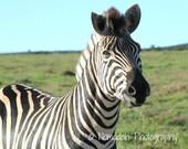 African art, animal photography, zebra photo, nomadah photography, african animal photo, wildlife photography, zebra stripes