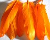 Goose Shoulder Feathers - Orange