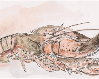 Massive Lobster, fine art watercolor painting New England, wall art decor room archival PRINT signed giclee art print, 8.5x11 orange brown