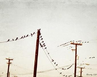 city birds, nature, sky, lines, fine art photography