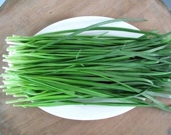2400 Organic Spring Onion Allium Seeds Scallion Bounching onion Perennial Onion Vegetable A058