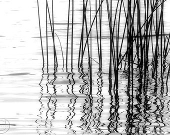 "Reeds Black and White Fine Art Photography Print. 5"" X 7"" Calming Waters, Reflections"