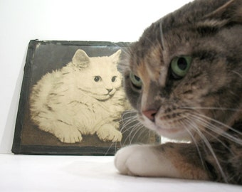 Vintage Cat Picture - Cat Folk Art - Cat Photo - Cat Wall Hanging - Primitive Cat Frame - Home Made Art Frame - Circa 1920