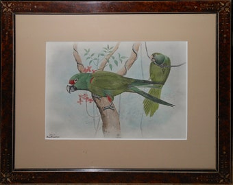 Very Rare  Rex Brasher with title Thick Bill Parrot plate 382.1 ca.1931 one of 100 made limited very nice color