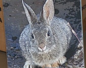 "Ceramic Tile or Coaster - Desert Cottontail 4.25"" x 4.25"""