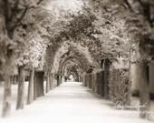 Vienna travel photograph, Schönbrunn Palace photo, Landscape photo, Trees picture, Baroque garden, Nature, Sepia,  8x12, Home decor, gift