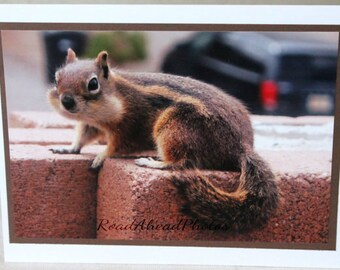 photo card, chipmunk, wildlife, animal, cute