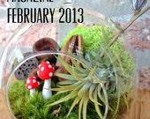 Mushroom & Air Plant Moss Terrarium - a wonderful Valentines day or Birthday Gift