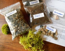 DIY Terrarium Kit (Without Container or Moss) Small Or Medium Sized