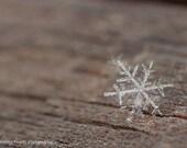 Macro Photograph of an Exquisite Single Snowflake - 12 x 8 Fine Art Photographic Print