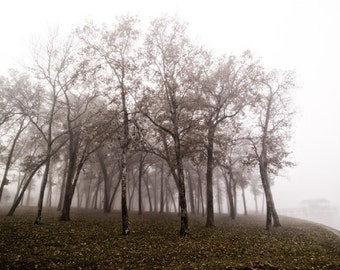 Art print Trees In Fog by Lake Fork Archival Inkjet Gicleé print. Photograph of a stand of trees in the fog at the edge of Lake Fork, Texas.