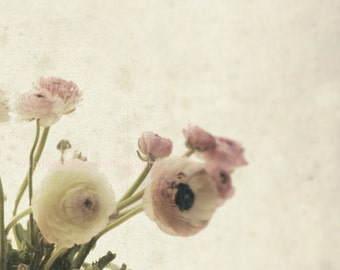 3 8x8 Pink Ranunculus, Shabby Chic, dreamy, delicate, soft 20% off by getting all 3