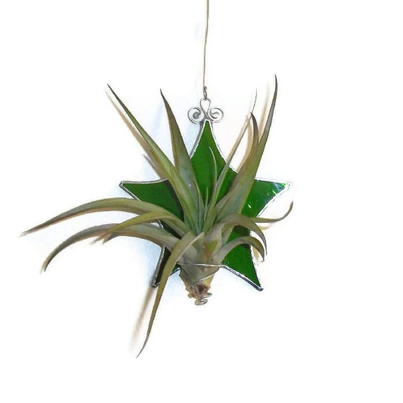 Green Stained Glass Air Plant Holder Star By