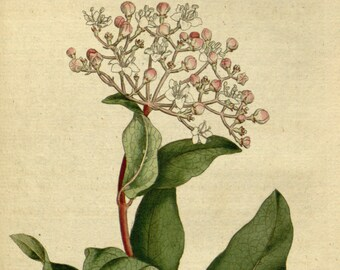 Botanic illustration, Wall art botanical, Nature botanical, 38