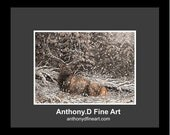 "Original ACEO Painting / Artist PRINT / ""Resting Bull""""Elk, Moose, Winter Landscape By Anthony D"