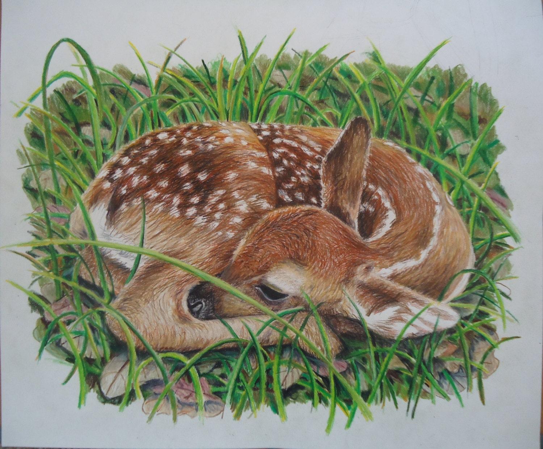 Original Baby deer artwork Hand drawn colored pencil art